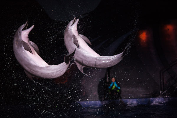 Dolphin Celebration at Georgia Aquarium